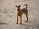 Hershey 01-2012 014