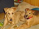 Hershey und Breezy 09-2010 027