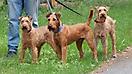 Hunde Deich 15.06.2014 003